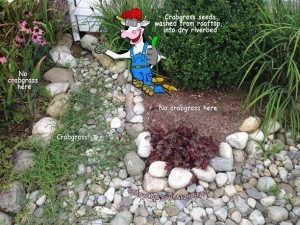 crabgrass_downspout