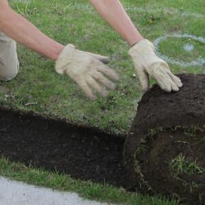 Lawn-Renovation-Roll-Grass