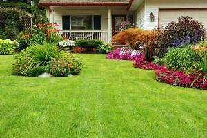See great lawn results after GrowCow Aeration and Seeding