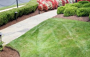 Lush grass with trim garden beds